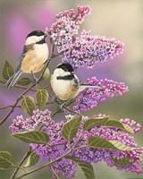 Lilacs and Chickadees Fine Art Print