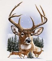 Whitetail Deer Montage/ Winter by William Vanderdasson - various sizes
