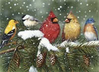 Backyard Birds On Snowy Branch Fine Art Print