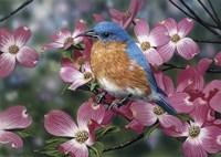 Bluebird/Pink Dogwood Fine Art Print
