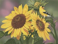 Goldfinch And Sunflowers Fine Art Print