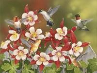 Hummingbird Feeding Frenzy by William Vanderdasson - various sizes