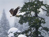 Soaring Eagle / Winter by William Vanderdasson - various sizes