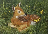 Fawn by William Vanderdasson - various sizes - $34.49