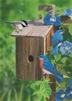 Birds At The Feeder (Bluebirds) by William Vanderdasson - various sizes - $42.49
