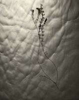 Floating Plant Form Fine Art Print