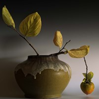 Still Life with Persimmon Fine Art Print
