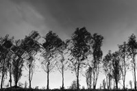 Xochimilco by Moises Levy - various sizes, FulcrumGallery.com brand
