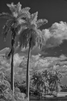 Eleven Palms by Geoffrey Ansel Agrons - various sizes