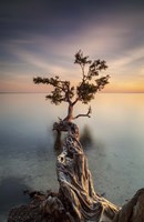 Water Tree III by Moises Levy - various sizes