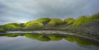Reflejo Verde 2 by Moises Levy - various sizes