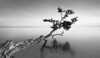 Water Tree IX by Moises Levy - various sizes
