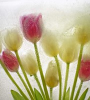 Flores Congeladas 614 by Moises Levy - various sizes