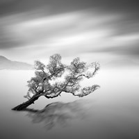 Water Tree VI by Moises Levy - various sizes