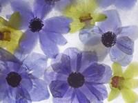 Flores Congeladas 631 by Moises Levy - various sizes