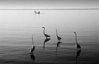 4 Heron and Boat Fine Art Print