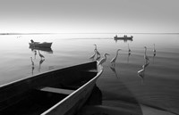 Herons and 3 Boats by Moises Levy - various sizes