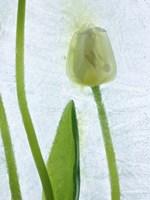 Flores Congeladas 572 by Moises Levy - various sizes