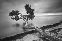 Water Tree 10 BW by Moises Levy - various sizes