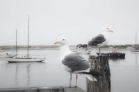 Two Seagulls & Boats Fine Art Print