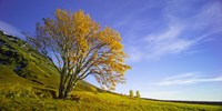 Yellow Tree by Moises Levy - various sizes, FulcrumGallery.com brand