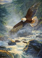 "12"" x 16"" Eagle Pictures"