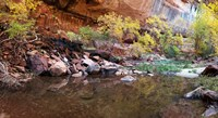 Reflecting pond in Zion National Park, Springdale, Utah, USA Fine Art Print