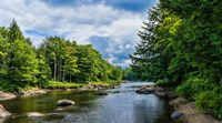 Trees along the Moose River, New York State by Panoramic Images - various sizes