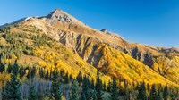 Aspen tree on a mountain, Coal Bank Pass, San Juan National Forest, Colorado, USA by Panoramic Images - various sizes