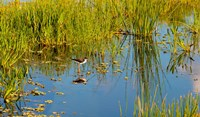 Reflection of a bird on water, Boynton Beach, Florida, USA by Panoramic Images - various sizes