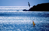 Windsurfer in the sea, Sint Maarten, Netherlands Antilles Fine Art Print