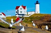 Seagulls at Nubble Lighthouse, Cape Neddick, York, Maine, USA Fine Art Print