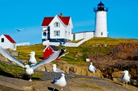 Seagulls at Nubble Lighthouse, Cape Neddick, York, Maine, USA Fine Art Print