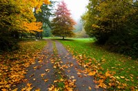 Fallen leaves on a road, Washington State, USA by Panoramic Images - various sizes