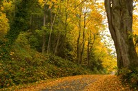 Road passing through a forest in autumn, Washington State, USA by Panoramic Images - various sizes, FulcrumGallery.com brand