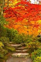Stone steps in a forest in autumn, Washington State, USA by Panoramic Images - various sizes