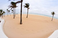 Palm trees on the beach, Fort Lauderdale, Broward County, Florida, USA by Panoramic Images - various sizes - $54.99