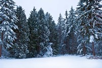 Trees along a snow covered road in a forest, Washington State, USA by Panoramic Images - various sizes - $54.99