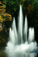 Waterfall in a garden, Butchart Gardens, Victoria, Vancouver Island, British Columbia, Canada by Panoramic Images - various sizes
