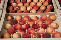 Peaches at a market stall, Lourmarin, Vaucluse, Provence-Alpes-Cote d'Azur, France by Panoramic Images - various sizes