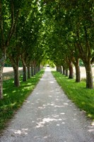 Treelined along a road, Vaugines, Vaucluse, Provence-Alpes-Cote d'Azur, France Fine Art Print
