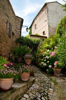 Flowers pots on street, Lacoste, Vaucluse, Provence-Alpes-Cote d'Azur, France by Panoramic Images - various sizes