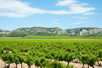 Vineyards with hills in the background, Alpilles, Route d'Orgon, Eyguieres, Bouches-Du-Rhone, Provence-Alpes-Cote d'Azur, France by Panoramic Images - various sizes, FulcrumGallery.com brand