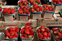 Strawberries for sale at weekly market, Arles, Bouches-Du-Rhone, Provence-Alpes-Cote d'Azur, France Fine Art Print