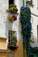 Building with flower pots on each window, Rue Des Arenes, Arles, Bouches-Du-Rhone, Provence-Alpes-Cote d'Azur, France by Panoramic Images - various sizes