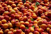 Nectarines for sale at weekly market, St.-Remy-de-Provence, Bouches-Du-Rhone, Provence-Alpes-Cote d'Azur, France by Panoramic Images - various sizes