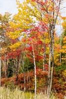 Autumn Trees, Muskoka, Ontario, Canada by Panoramic Images - various sizes