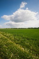 Farm field in springtime, Bergen, Lower Saxony, Germany by Panoramic Images - various sizes