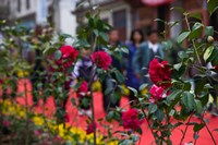 People at spring flower festival, Old Town, Dali, Yunnan Province, China Fine Art Print