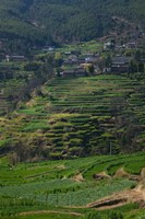 Houses with terraced fields at mountainside, Heqing, Yunnan Province, China by Panoramic Images - various sizes, FulcrumGallery.com brand